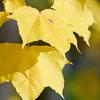 秋の盛り2