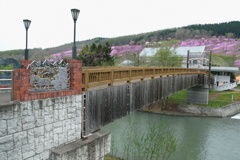 芝桜へ渡る橋