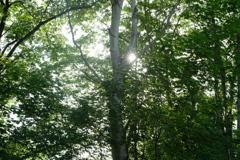 暑い日は森林へGO