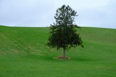 富良野で見かけた木
