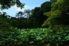 180710b植物園52+