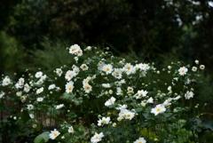 181012b植物園22+