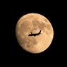 明日が中秋の名月