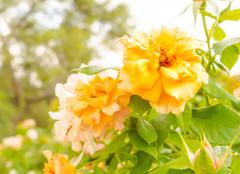 マドリードのレティロ公園で見つけた花