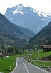 スイスアルプスと放牧