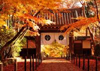 オレンジ色の山門(紅葉の風景①)