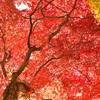 空を覆う秋(紅葉の風景⑥)