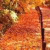 オレンジロード(紅葉の風景③)