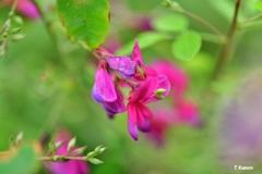 秋の花~萩①