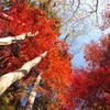 空から降ってくる秋(紅葉の風景⑦)