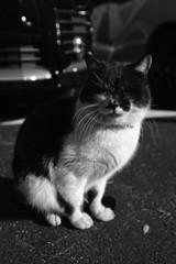 唐沢山神社  猫