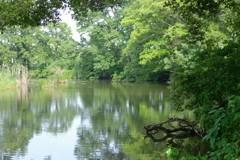池の畔に住む者は