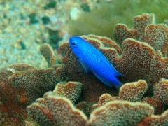 サンゴの中から