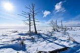 北の大地 -野付半島・冬1-