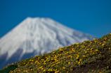 1月14日の富士山。【春はまだかな?煙突無し。(⌒-⌒; )】