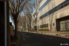春待ちわびる街路樹。