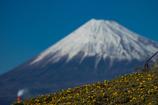 1月14日の富士山。【春はまだかな?】