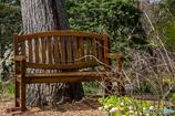 木の下のベンチ。