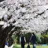 桜並木の家族