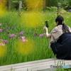 花のような人 菖蒲編