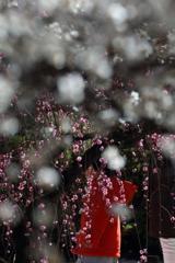 雪のように花が降る