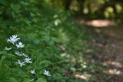 野菊の小道