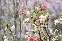 春のぎっしり詰め合わせ