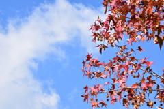 晩秋の空高く