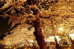 夜の弘前公園4