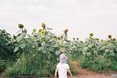 「こっちにおいで」と、向日葵が誘っているような?ちょと怖いような楽しいよな