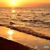冬の青山海岸の夕日