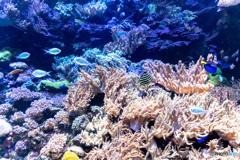 マリンピア日本海 熱帯魚2