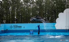 マリンピア日本海 イルカショー