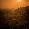 水滴の蜘蛛の巣
