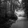 林道の入り口にて