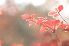 紅葉(陽)