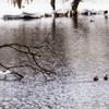 A Pond