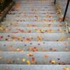 秋をちりばめて