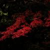 Autumn In The Dark