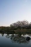 澄んだ空と桜