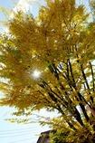 木漏れ日の色