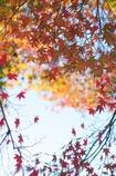 秋のイロドリ