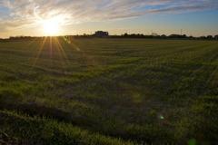 照らさられる田畑