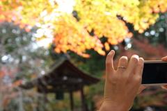 紅葉と指輪