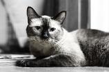 【家猫】ポニョ