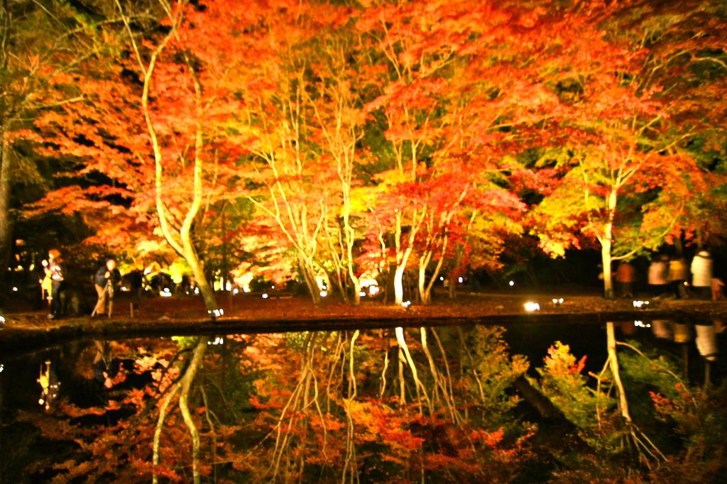 水面にも紅葉