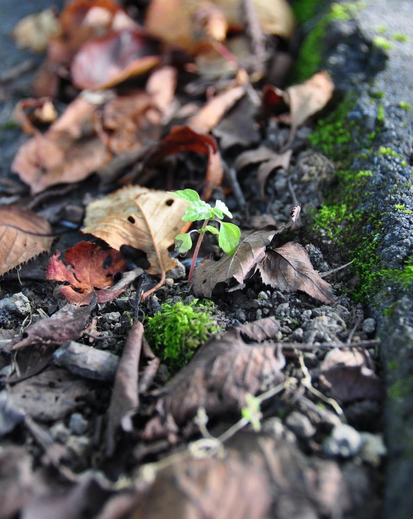 秋の気配 ①