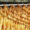 タバコの葉、乾燥中⑤