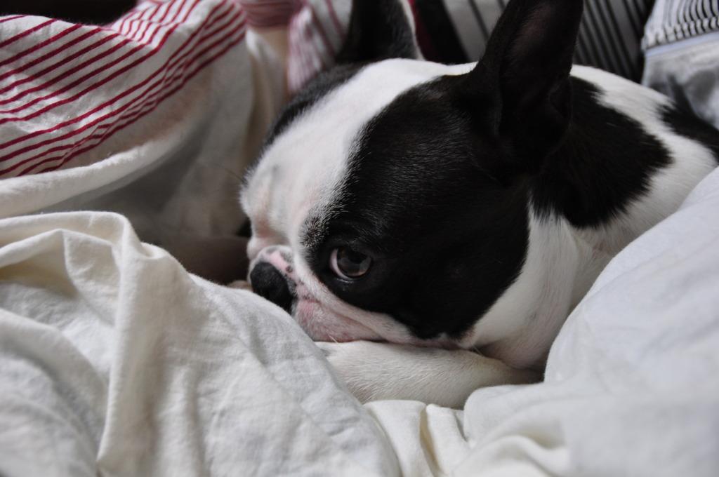 マル、寝る2