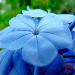 RICOH RICOH GX200で撮影した植物(花)の写真(画像)